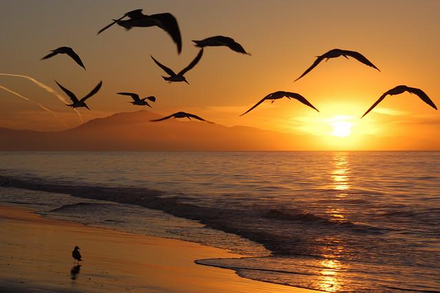 seagulls flying free at dawn