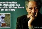Morgan Freeman cares about bees